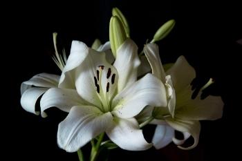 Teste Flor