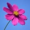 Significado das Cores das Flores