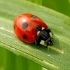 Significado dos insetos