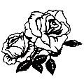 rosa-1_xl.jpeg
