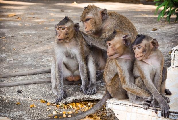 O Macaco E Seus Significados