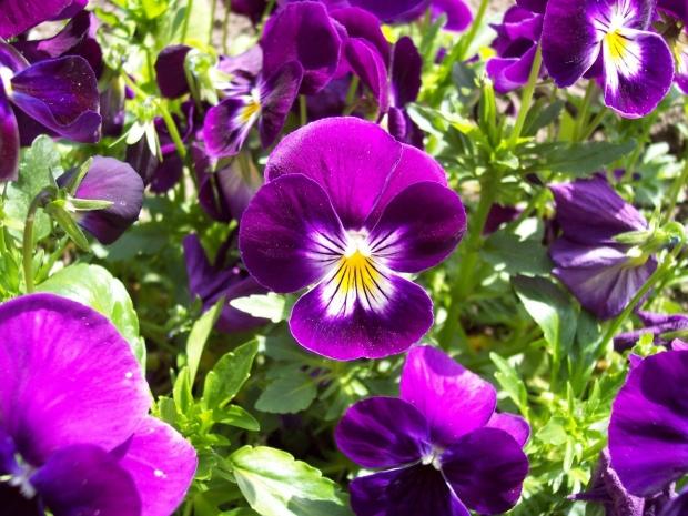 20 Flores Com As Simbologias Mais Especiais