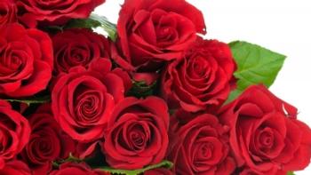 Significado De Rosas Vermelhas