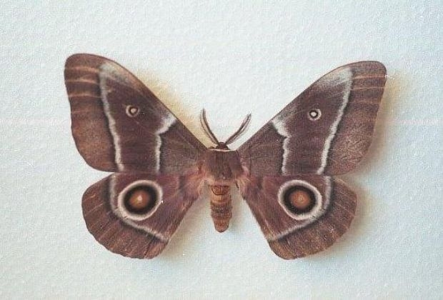 Significado Da Mariposa