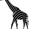 Girafa: um símbolo de intuição e elegância