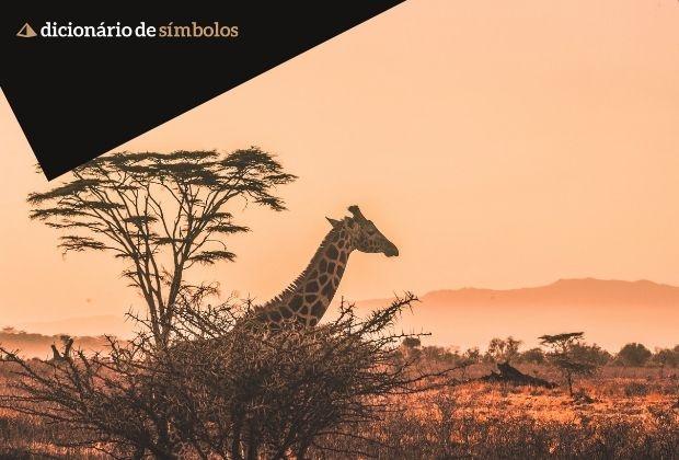 Girafa Um Simbolo De Intuicao E Elegancia