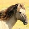 Cavalo: simbologias e significados